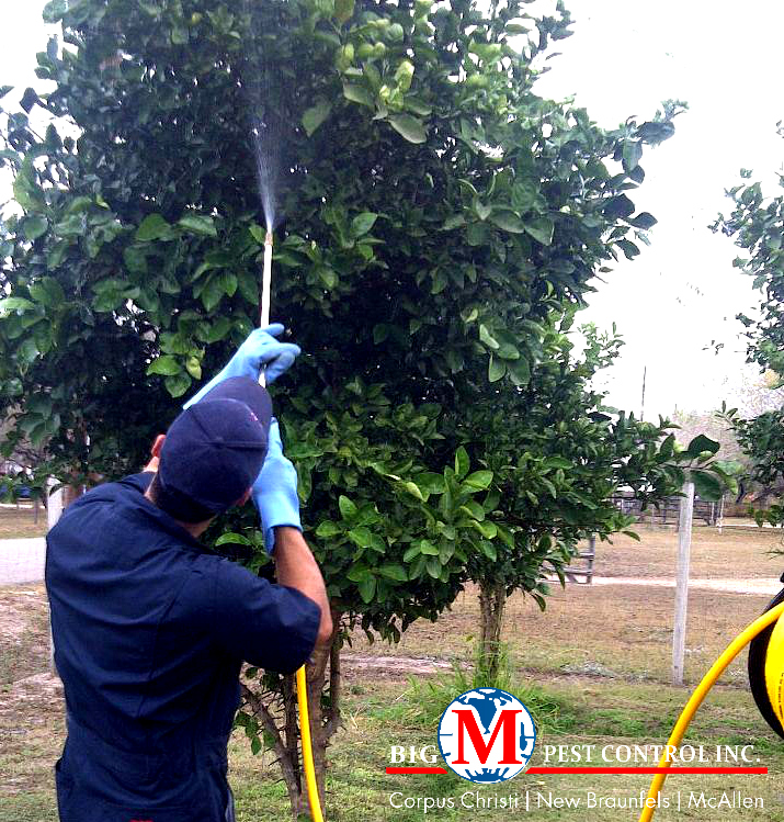 Tree Spraying Pest Control Services In Corpus Christi Tx